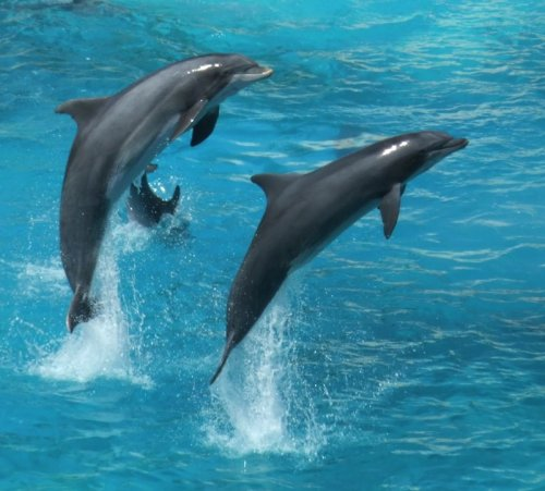 dolphins-366